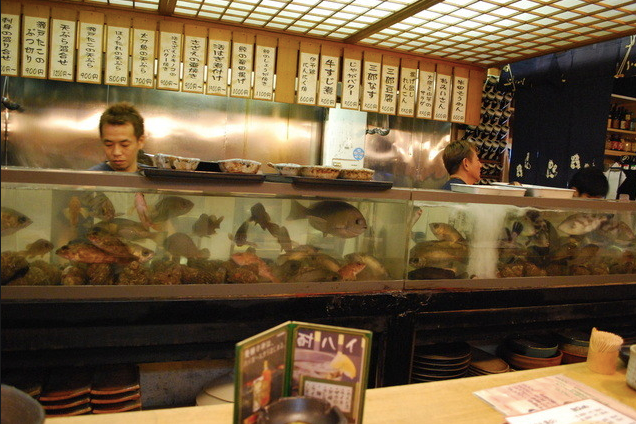 大将の釣った活きのいい魚料理:四国三郎よしの川