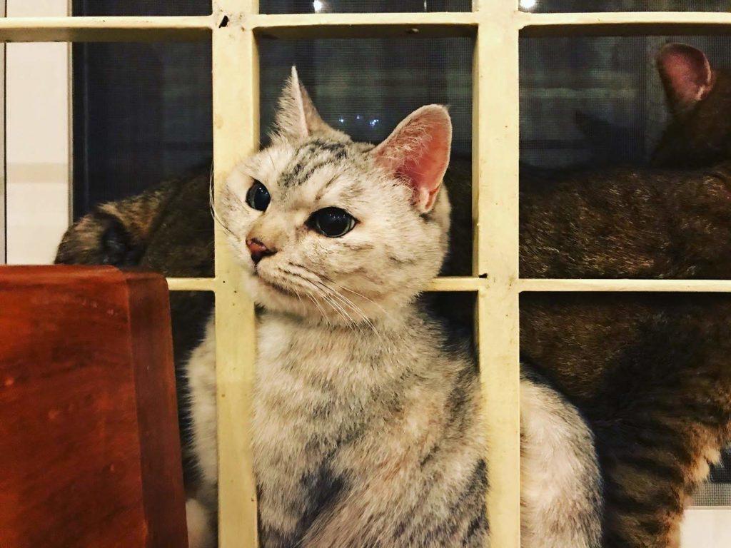 猫と海外移住 プノンペン
