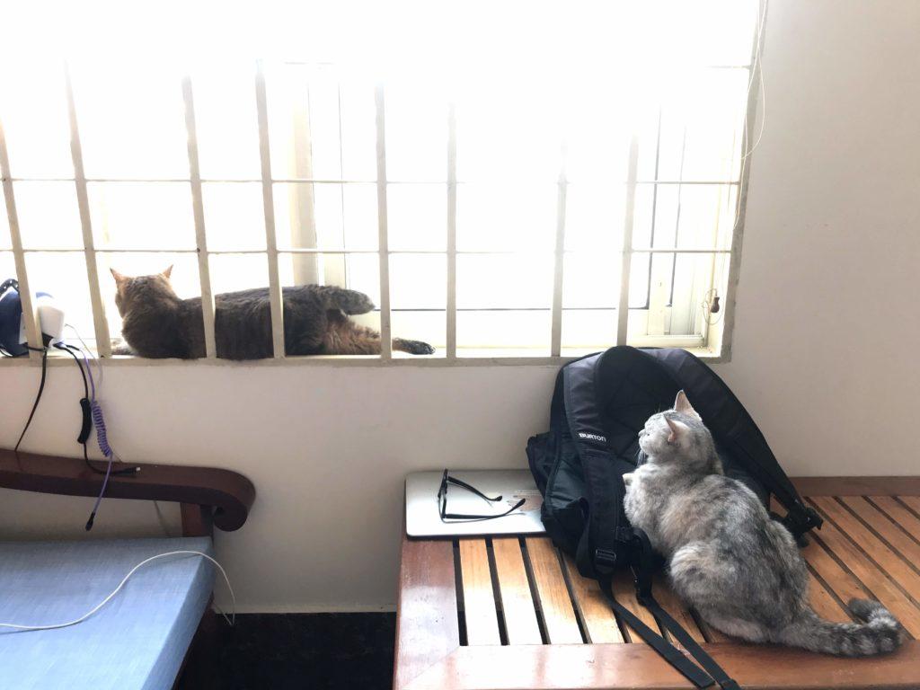 猫と海外移住 カンボジア