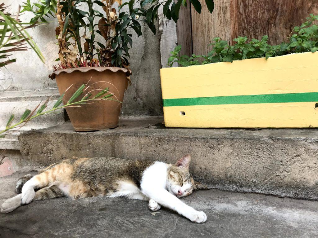 プノンペン 野良猫