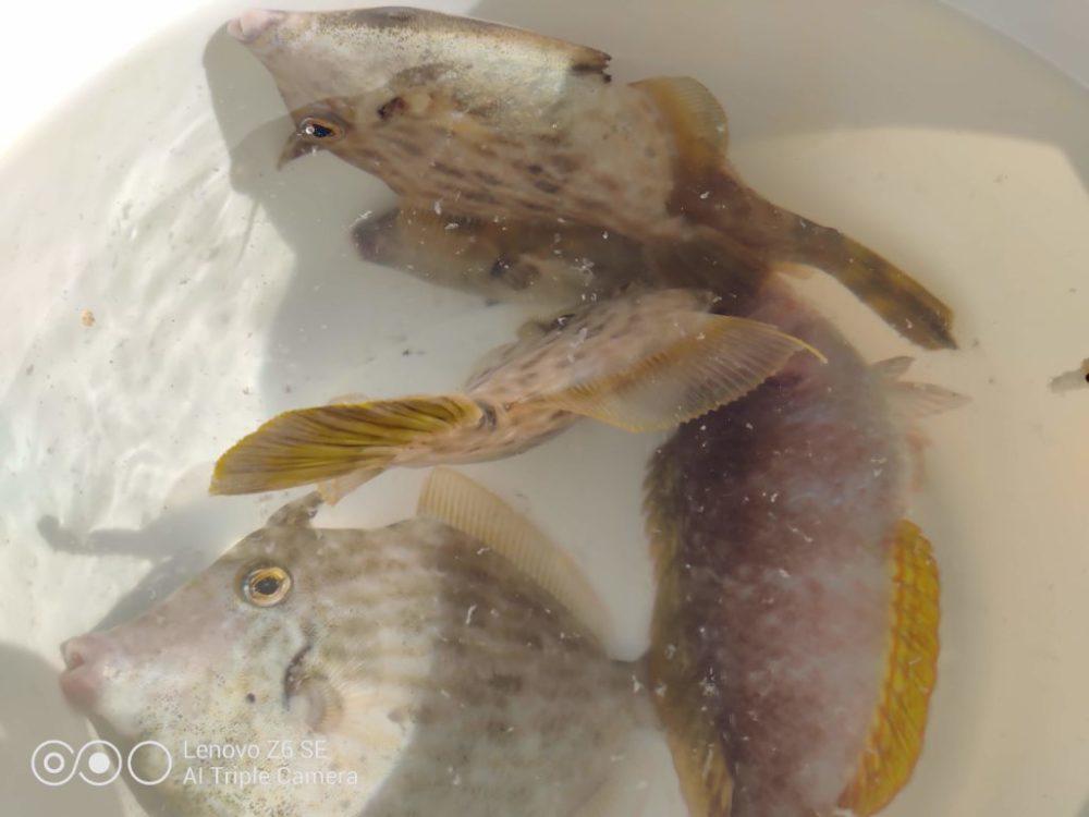 小型 竿 釣り 釣れる