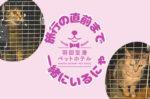 【羽田空港ペットホテル】旅行の直前まで一緒に過ごせる | dooorblog